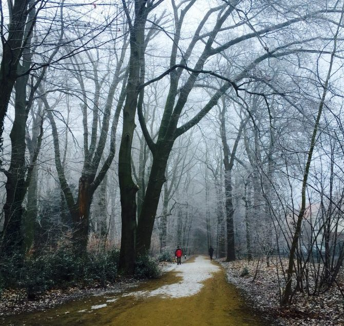 A cold day in Te Boelaerpark